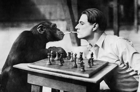Когда животные умнее человека